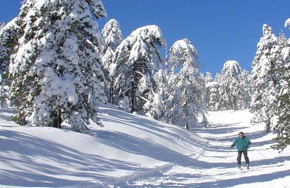 Зима на Кіпрі